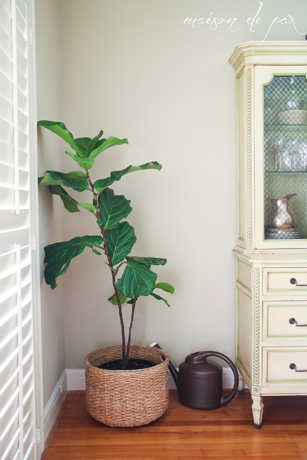 Indoor plant ideas- Maison de Pax