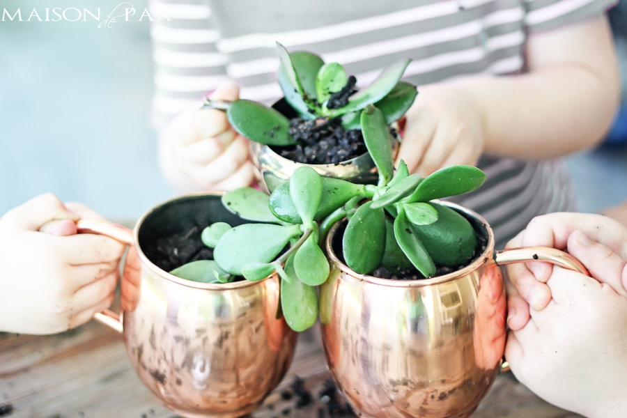 Copper Moscow mule mugs filled with succulents- Maison de Pax
