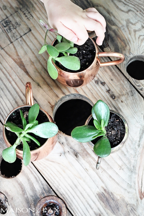 perfect summertime kid's activity! mini succulent planters in cups and bowls | maisondepax.com