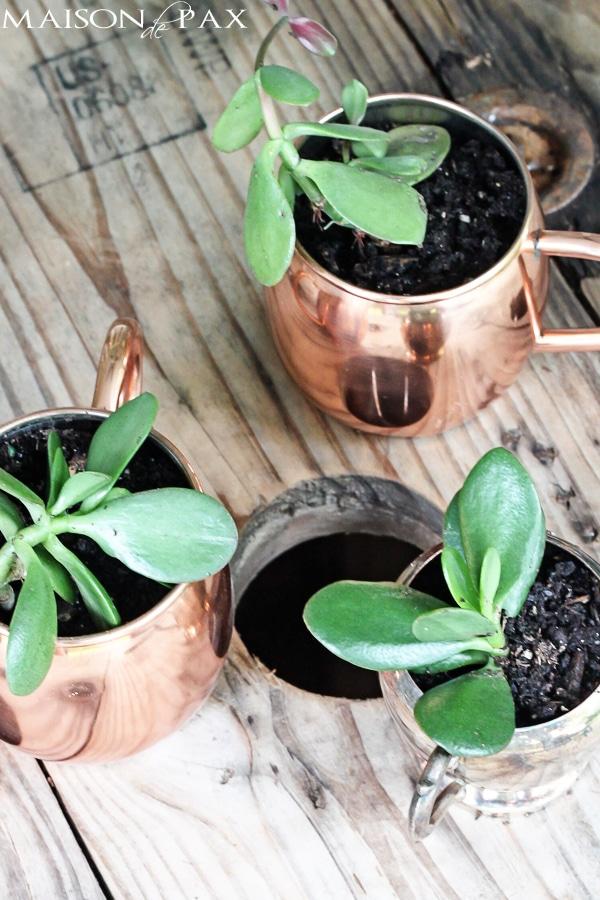 Mini-succulent planters- Maison de pax