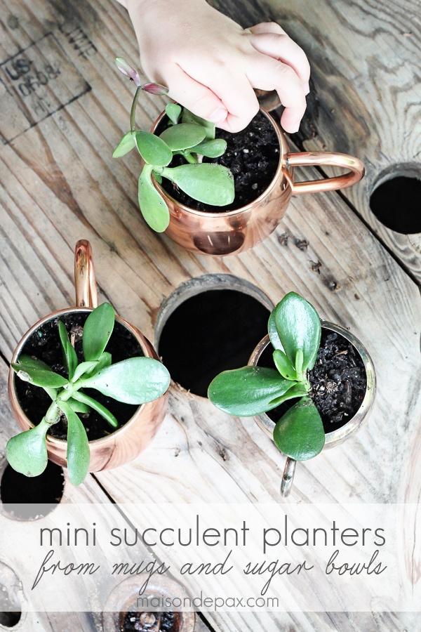planting succulents in planters- Maison de Pax