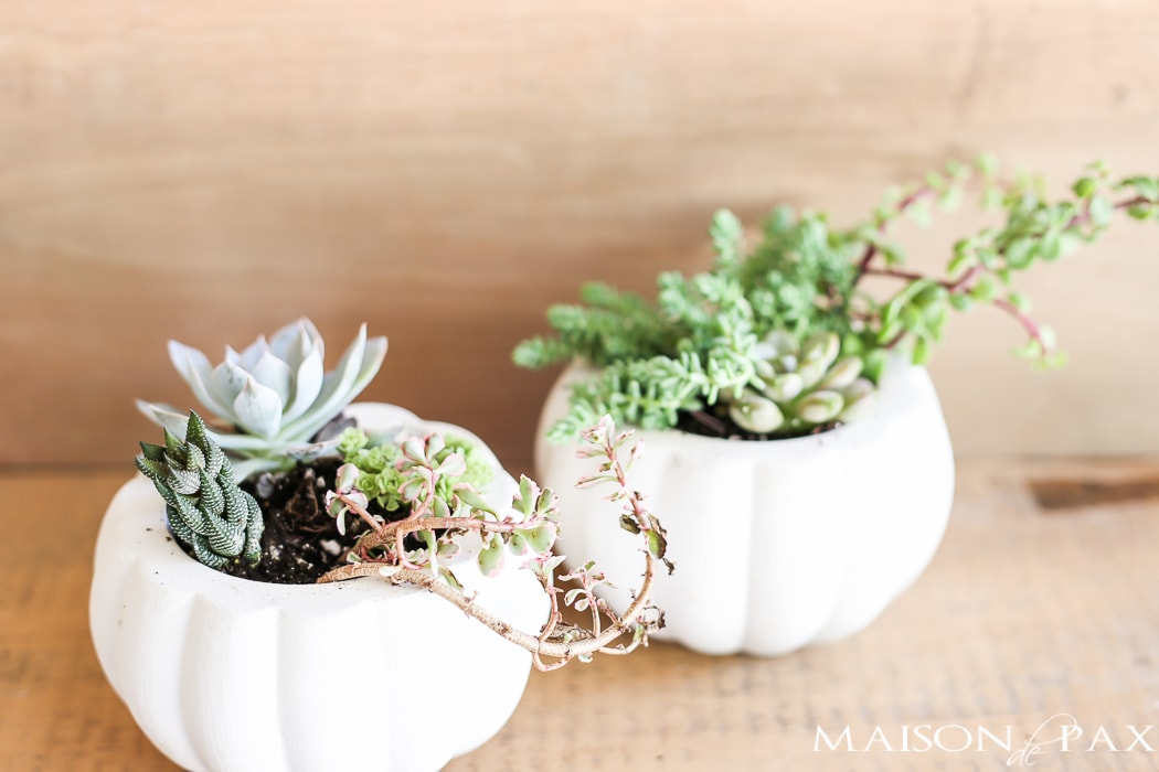 Fall pumpkin planters with succulents- Maison de Pax
