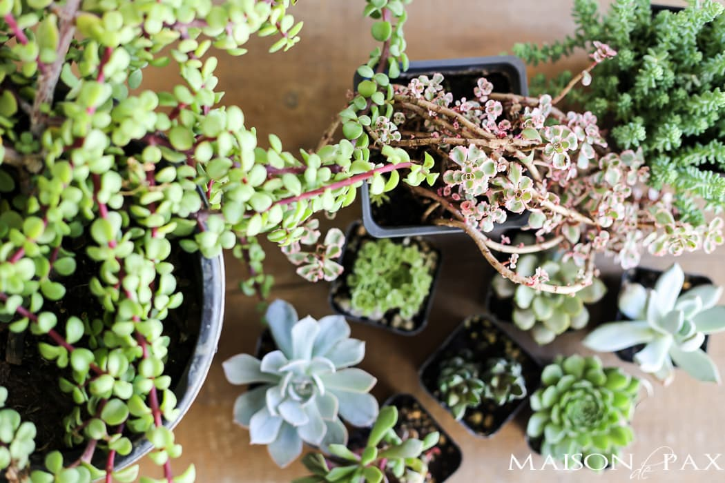 mini succulents make gorgeous fall planters- Maison de Pax