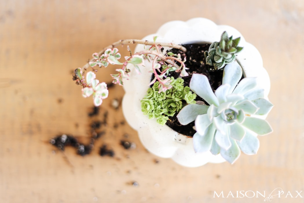 Easy Fall decor with succulents- Maison de Pax