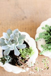 How to Make Fall Succulent Planters