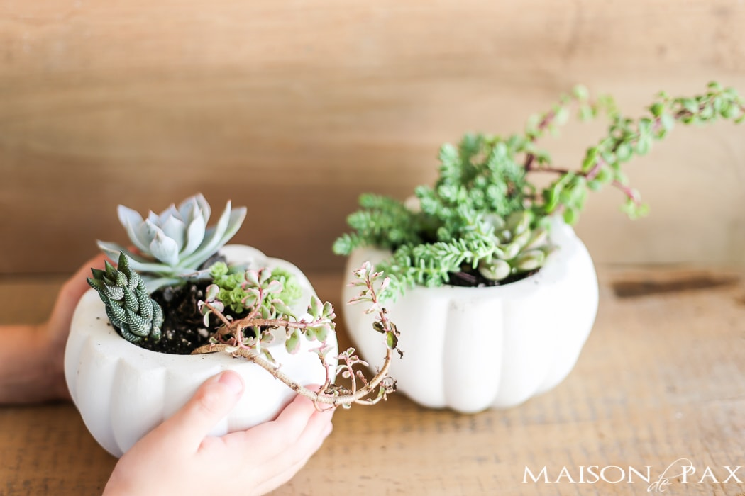 Mini pumpkins with succulents- Maison de Pax