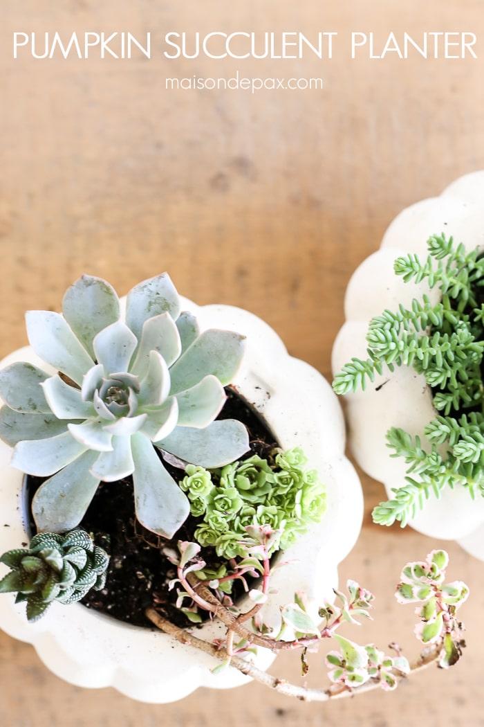 Easy Fall Succulent Planters- Maison de Pax