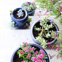 Tips for Creating Pretty Potted Plants