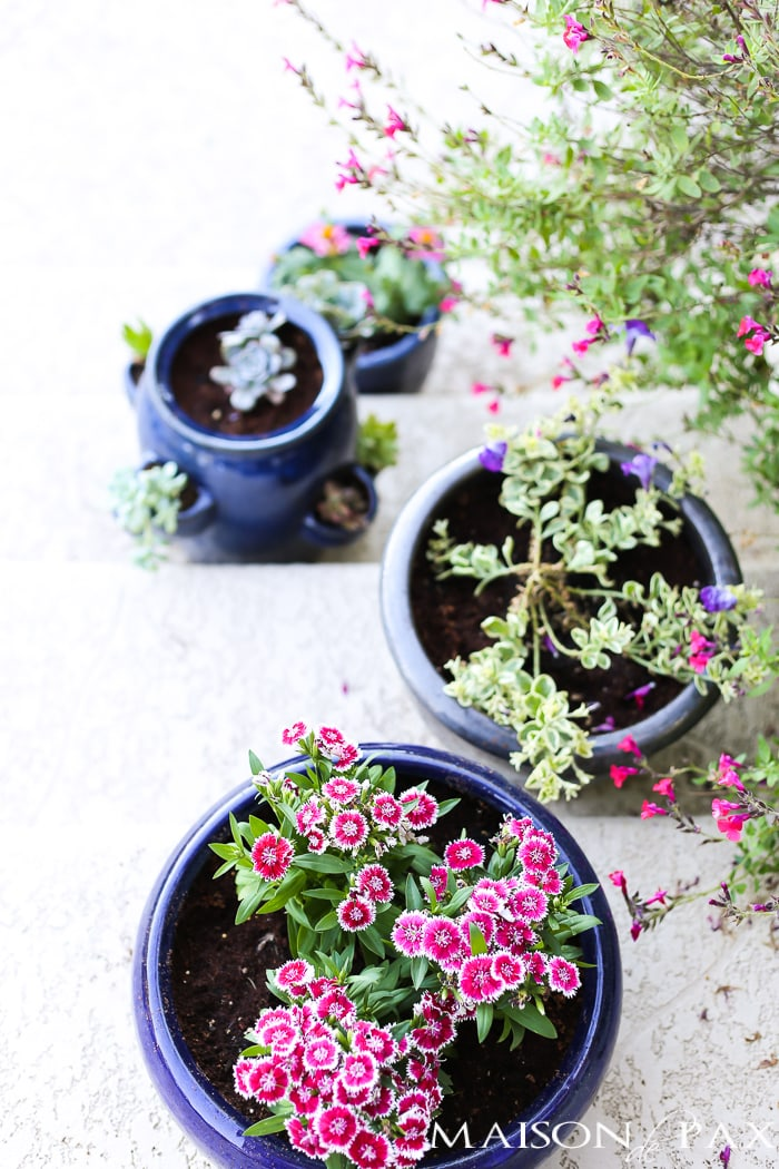 Pink, purple, and white spring annuals in pots- Maison de Pax