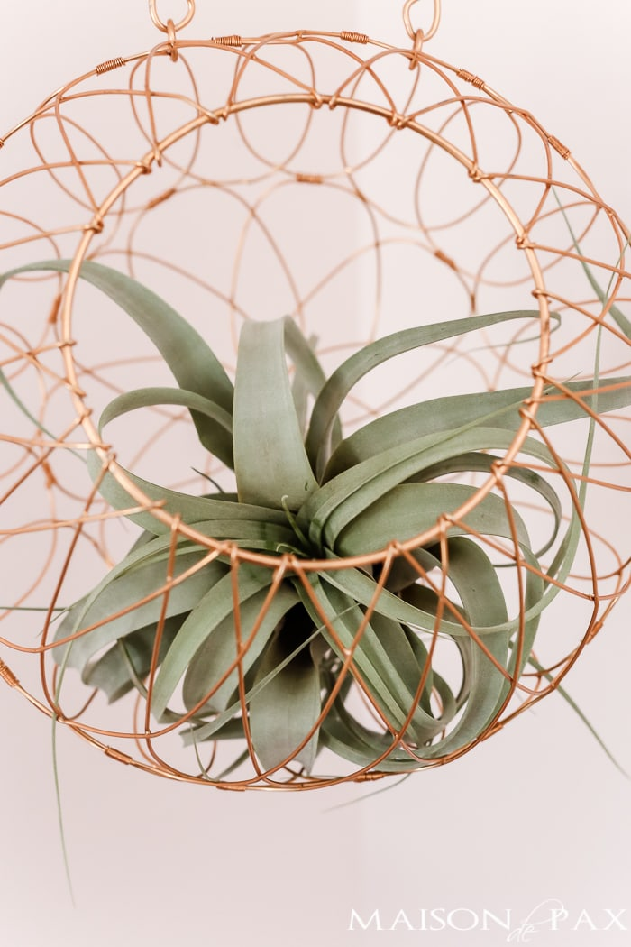 Succulent and copper wire hanging- Maison de Pax