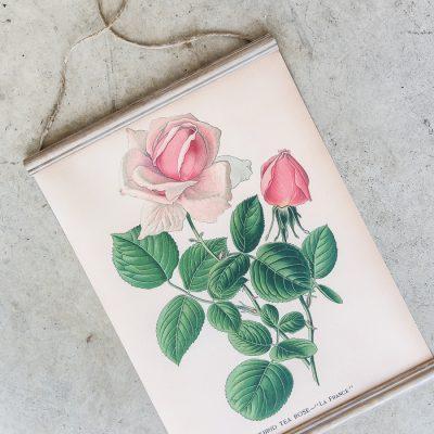 DIY Hanging Printable Botanical