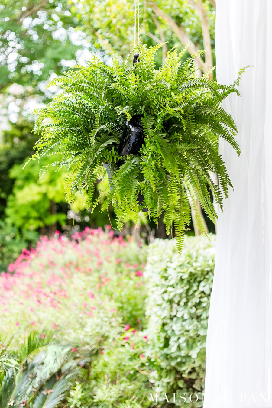 White outdoor curtains and leafy boston ferns make a gorgeous patio! Learn how to make a wine bottle plant waterer to keep your hanging plants hydrated! #winebottlewaterer #winebottle #upcycle #garden #gardening #diygardening #hangingplants #bostonfern #summergarden