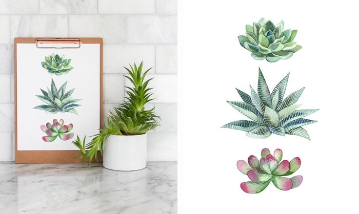free summer printable: succulent wall art
