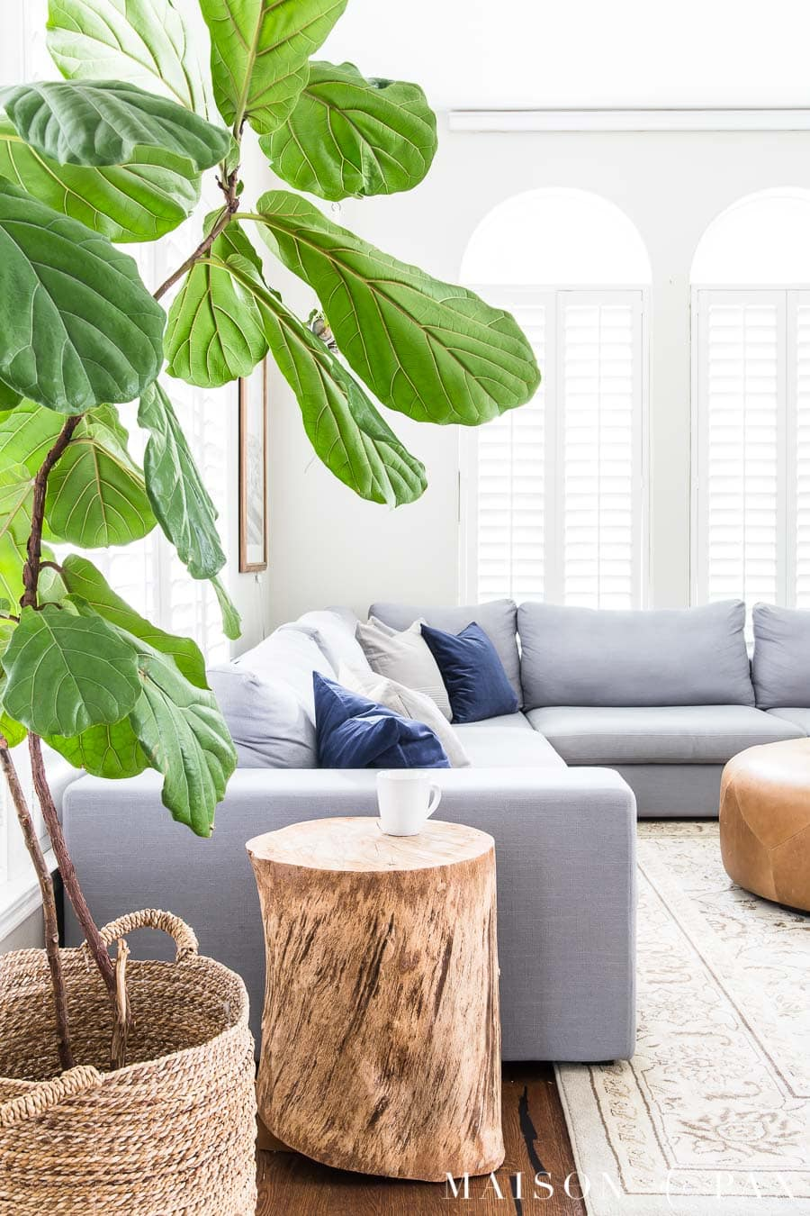 Large fiddle leaf fig in a gray and white living room- Maison de Pax