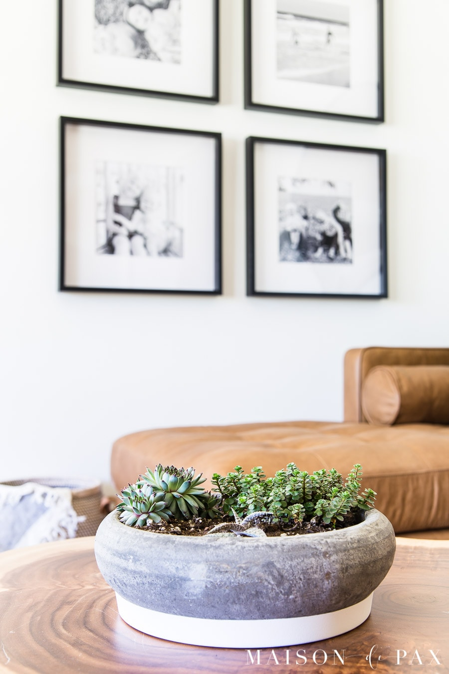 succulents in concrete planter on cedar coffee table | Maison de Pax