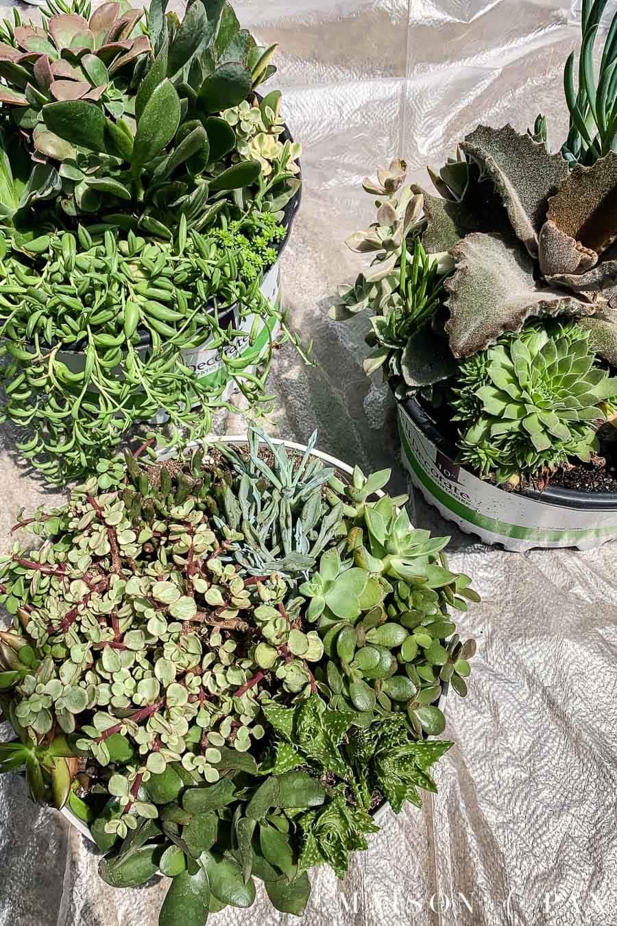 succulent container gardens | Maison de Pax
