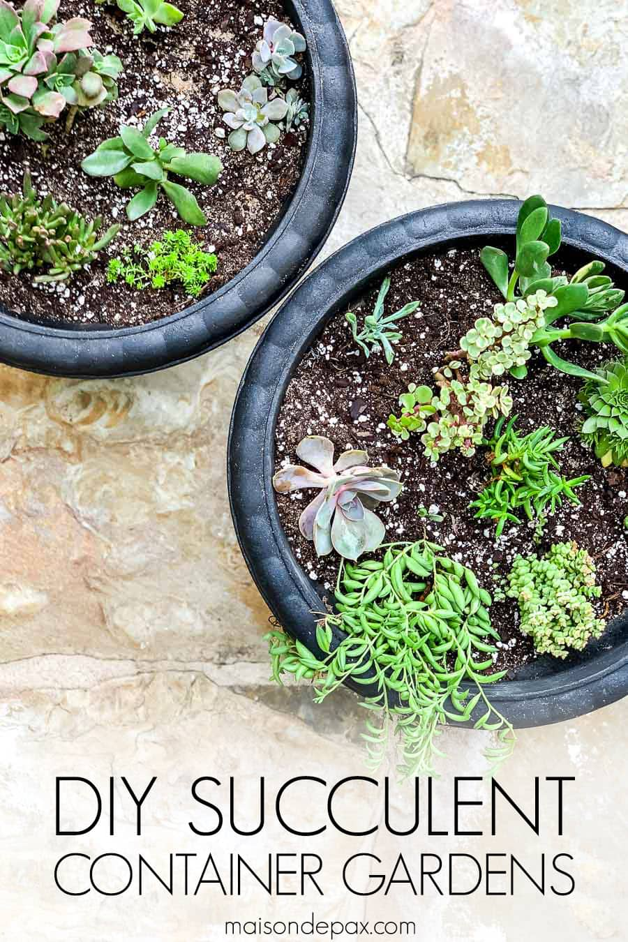 two black planters with a succulent mix and overlay: diy succulent container gardens | Maison de Pax