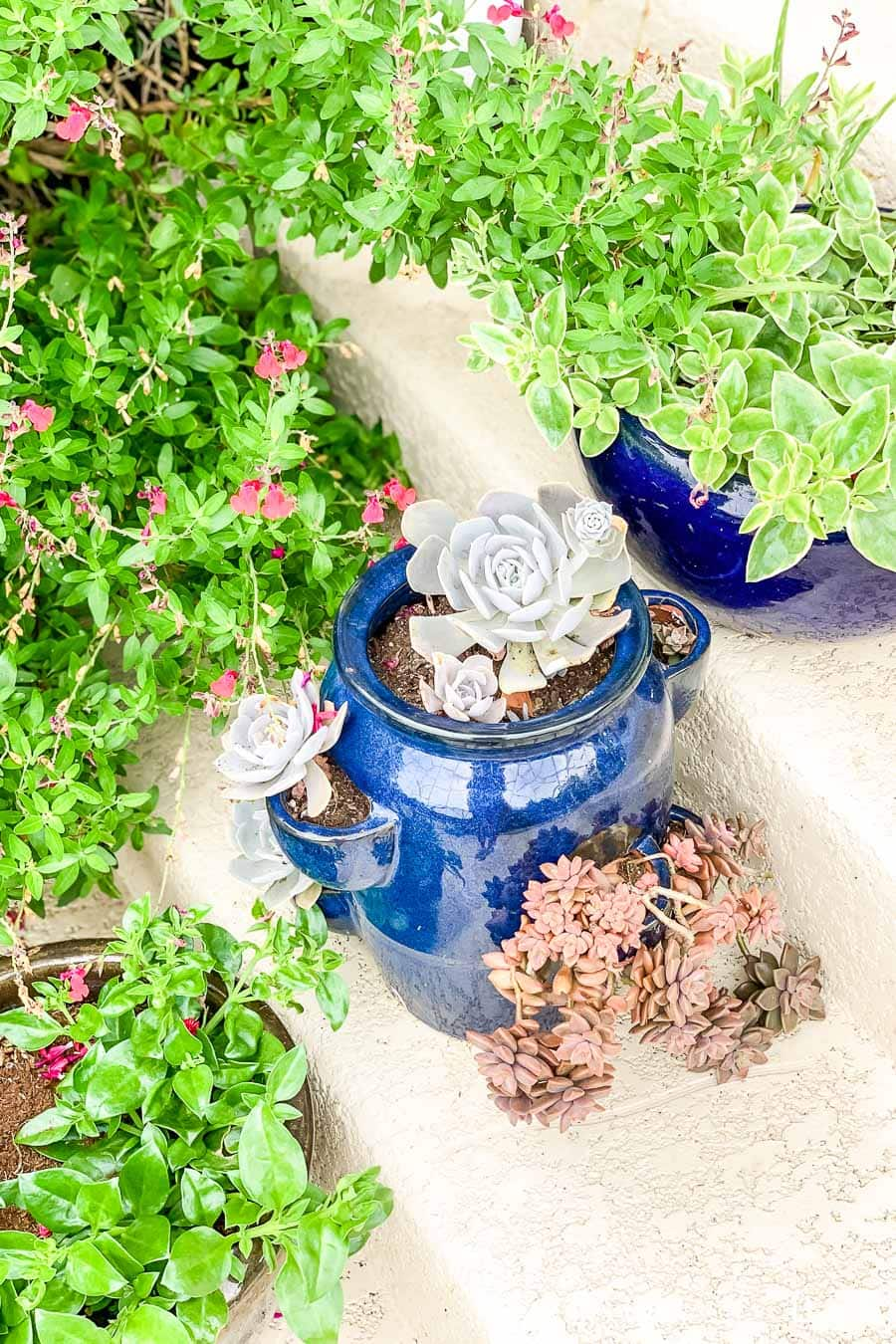 ceramic pots with beautiful succulents lining cream colored porch steps | Maison de Pax