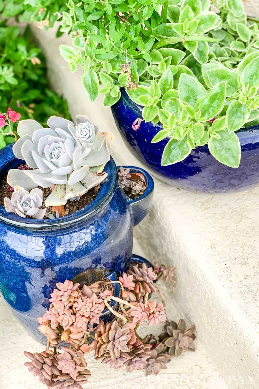 Succulent Care And Watering Maison De Pax
