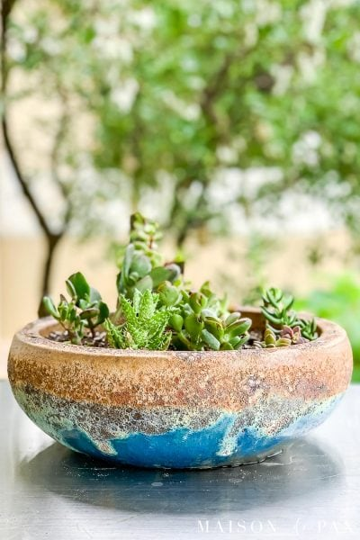 glazed turquoise pot with low bowl shape filled with small succulents | Maison de Pax