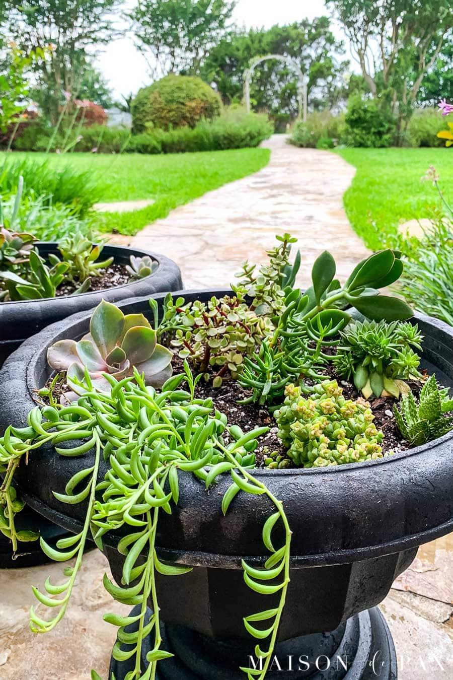 black succulent planters with overhanding succulents | Maison de Pax