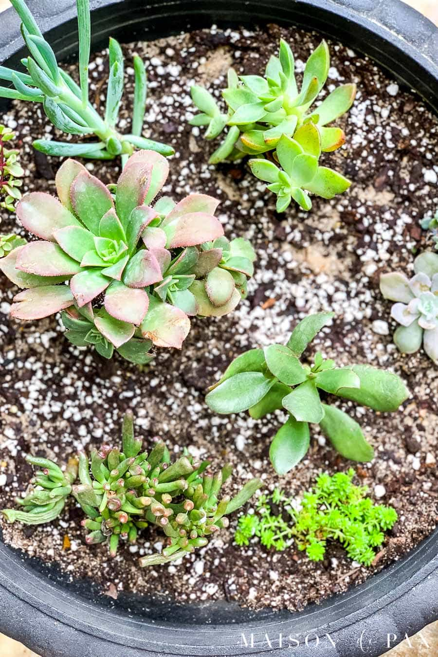 Pot of mixed succulents | Maison de Pax