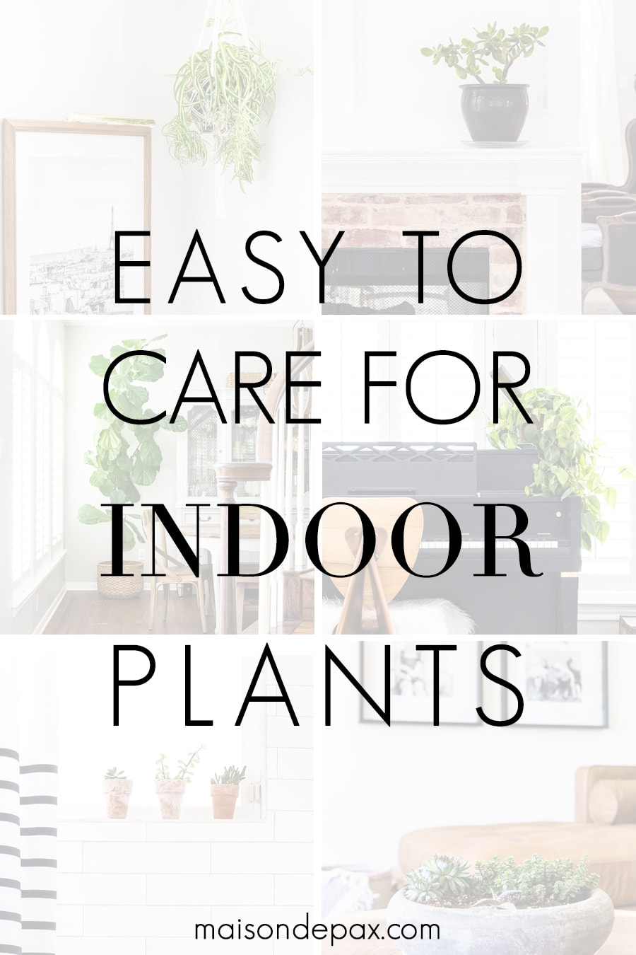 easy to care for indoor plants with pictures of house plants | Maison de Pax