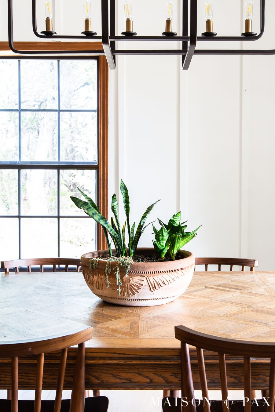 snake plant and dwarf sansevieria in a clay pot on table | Maison de Pax
