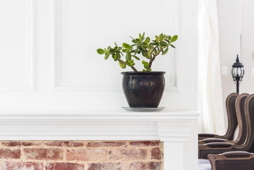 jade plant in black pot on white fireplace mantel | Maison de Pax