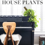 best low maintenance house plants: philodendron on a piano | Maison de Pax