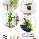 best low maintenance house plants | Maison de Pax