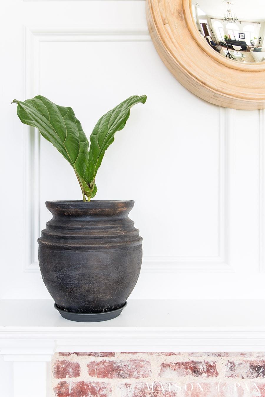 aged black pot with fiddle leaf fig on white mantel | Maison de Pax
