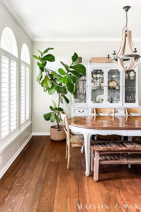 large fiddle leaf fig tree in dining room